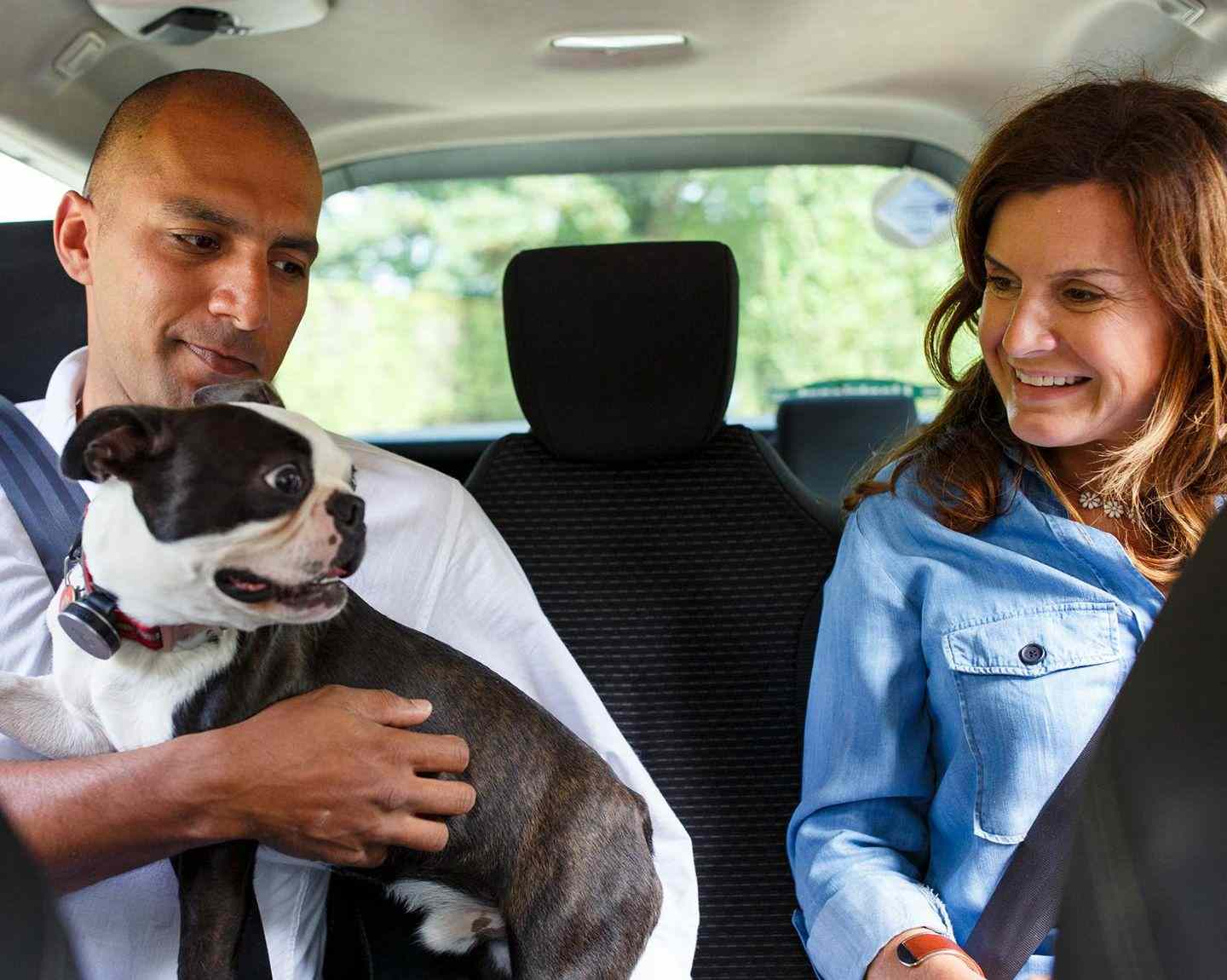 Dogs in Uber rides