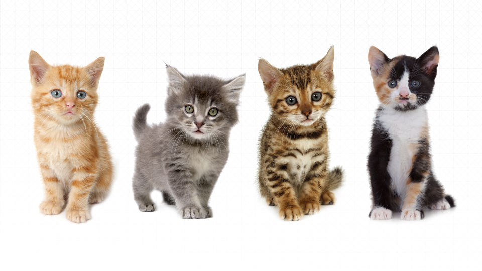 Clear Your Calendars—#UberKITTENS Are Coming To Los