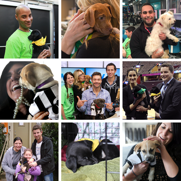 uber_PuppyBowl_Photos